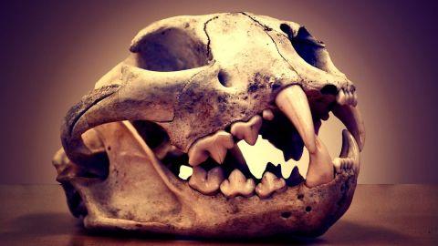Tráfico de animales salvajes en la antigua Mesoamérica