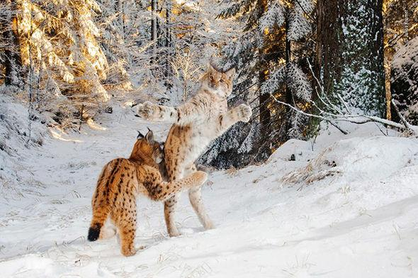 Wildlife photographer of the year 2018 nature pictures 1490895